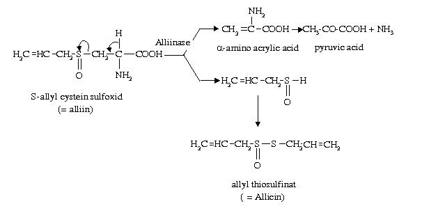 Khác biệt điển hình về thành phần hóa học tỏi đen so với tỏi tươi?