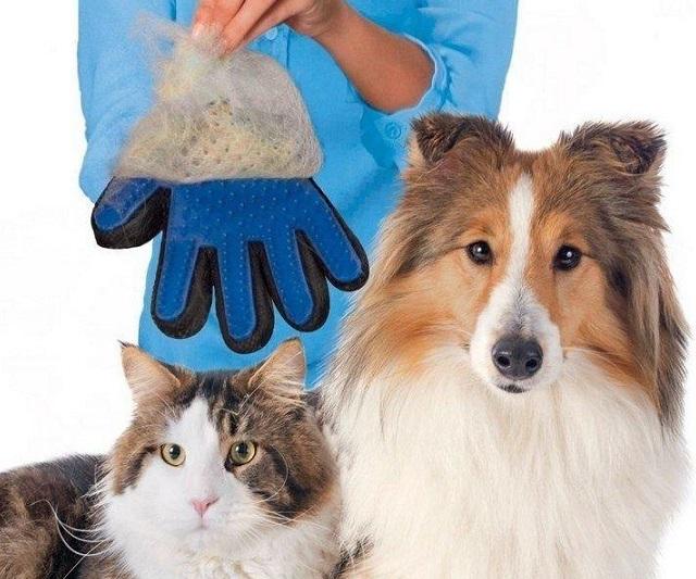Chải lông Pet nhẹ nhàng hiệu quả