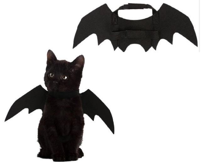 Cosplay halloween mèo bá đạo