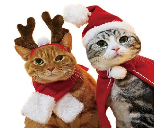Khi các chú pet đón giáng sinh