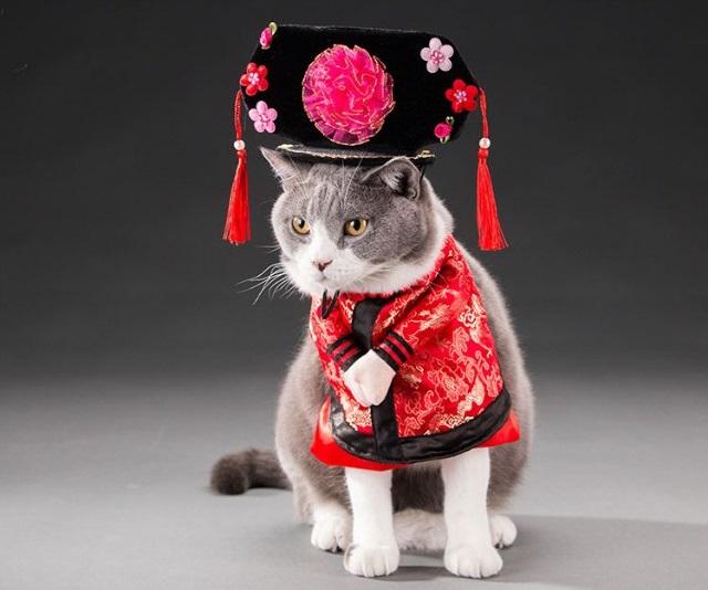 Quần Áo Dành Cho Chó Mèo