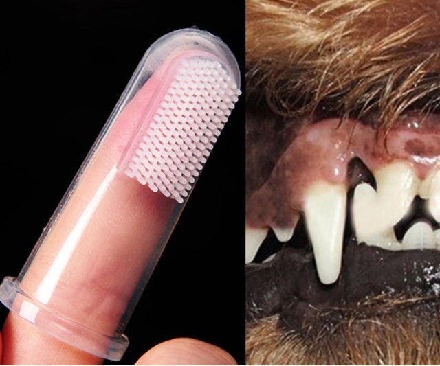 Vệ sinh răng miệng cho Pet