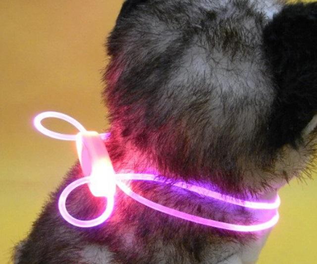 Vòng phát sáng dành riêng cho pet